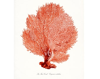 Coastal Decor Sea Fan Sea Coral Natural History Giclee Art Print 8x10 Coral