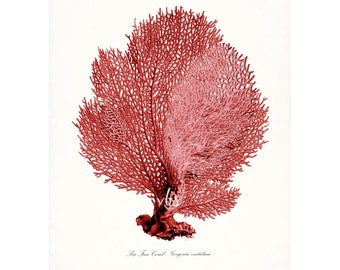 Coastal Decor Sea Fan Sea Coral Giclee Art Print 8x10 color options