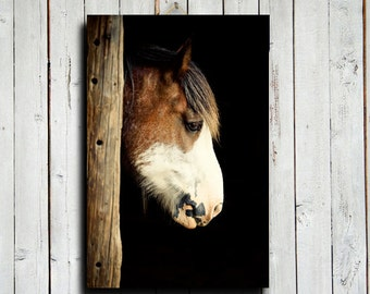 The Clydesdale - Horse art - Draft Horse photography - Animal photography - Horse decor - Horse photography - Horse canvas