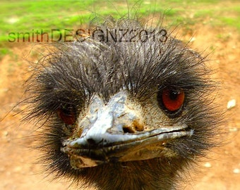 Ostrich Smiles, Photography, Animal Photography, by Abby Smith