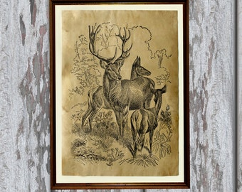 Animal art print Deer illustration Old paper decor  Stag antlers AK9
