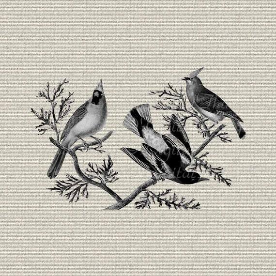Birds On A Branch Tree Cardinal Bird Art Rustic Wall Decor Art