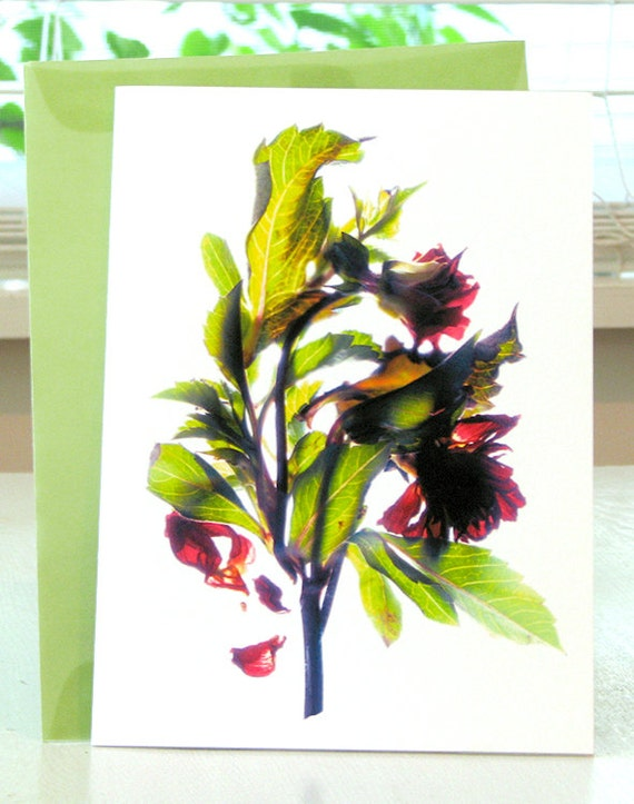 Floral Note Card Red Dahlia Artist  Card 5x7 Blank free Shipping US