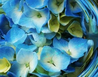 nantucket art, bohemian garden: hydrangea bloom dizzy