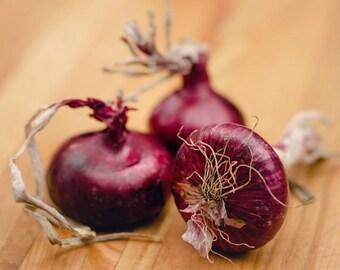 Food Photography - Kitchen Art - Red Onion Photograph - 8x10 Fine Art Photography Print - Red Purple Kitchen Decor