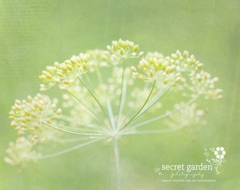 flower nature photo print - whimsical fine art nature photography, green, light, wall art, bokeh