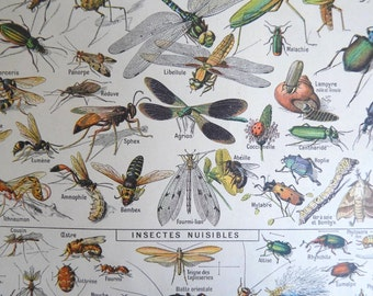 Antique French DICTIONARY ILLUSTRATION, A4, 2 sided, Insects. Larousse universel, 1922. Insect Print.