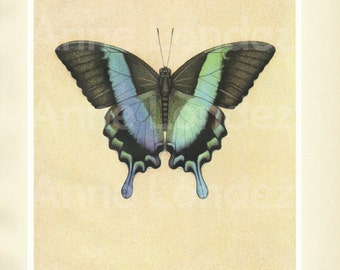1950 Vintage butterfly poster Papilio Antique butterfly art butterfly illustration French print Tropical butterfly gift Butterfly decor