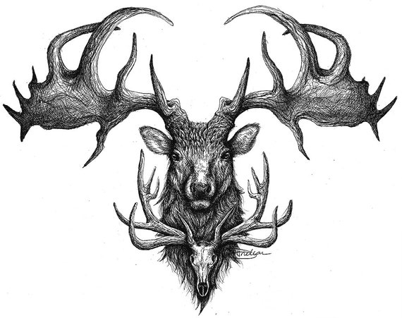 Items similar to Print 8x10 - Irish Elk North American Elk ...