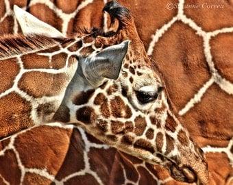 Giraffe, pattern, brown, animals, baby giraffe, wildlife