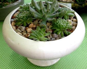 succulent dish gardens