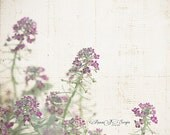 Flower Print - Lavender Nature Photography Flower Art - Spring - Neutrals Shabby Chic Kitchen Wall Decor Color Photo - Valentine's Gift Idea