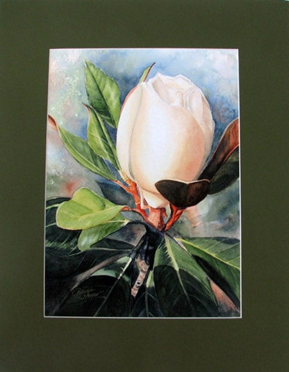 """Archivall Print / From Original Watercolor / Of Magnolia Bud / 8.5""""x11"""""""