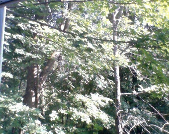 hello tree woods and sunshine