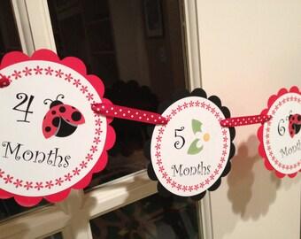 Lady bug Newborn - 12months Photo Banner