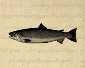 Digital Image Trout Printable Fish Graphic Download Illustration Vintage Clip Art for Transfers Printing etc HQ 300dpi No.4161