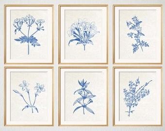 Blue Botanical Prints, Blue Wall Art, Botanical Prints, Botanical Plates, Jasmine, Jasmine Prints, Floral, Wall Art, Set of 6 Prints