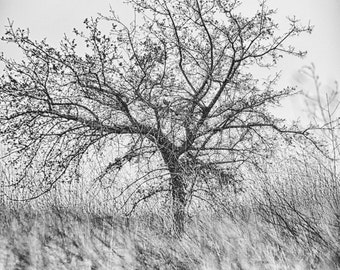 "Black and White Photography - black and white tree in grass, landscape photography, home decor, nature wall print, tree photo, ""Simple Life"""