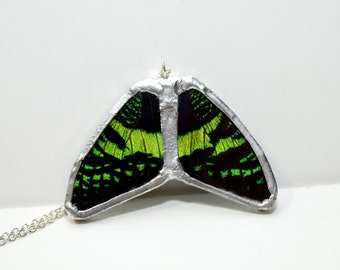 FREE SHIPPING  Real Butterfly Wings (Sunset Moth Forewings) Encased in Hand Cut Glass and Soldered Pendant Necklace