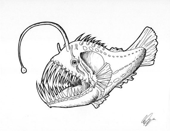Related Keywords & Suggestions for Angler Fish Diagram