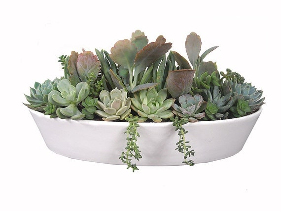 "Items Similar To Pastel Succulent Garden 13"" White Boat"