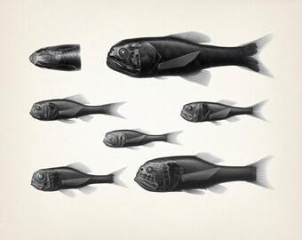 Mechanical robot looking fish - Fine art print of a vintage natural history antique illustration