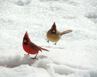 Cardinals Photograph - Winter Bird Art - Nature Art - Love Birds  - New York Red cardinal - Snow and Birds Art - Bird(Animal) Photograph