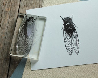 Cicada Rubber Stamp - 2x3 Inches