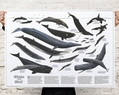 Great Whales of the World (1976) Premium Poster