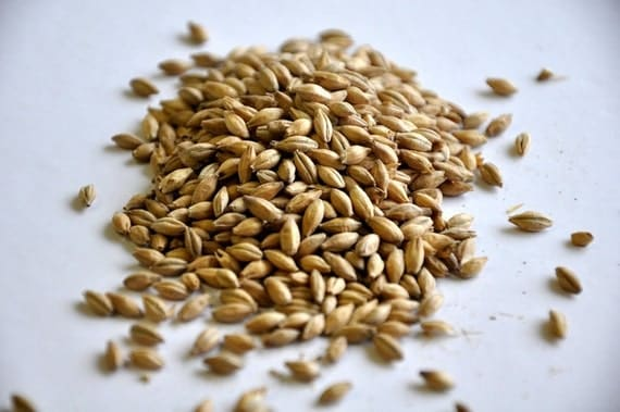All Natural German Pilsner Malt For Home Brewing 1 Pound