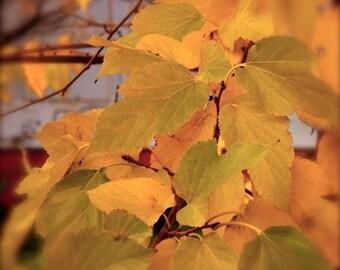 Orange wall art, Autumn leaves, nature photo, shabby chic decor, Wall art, fall leaves, fall wall decor, orange