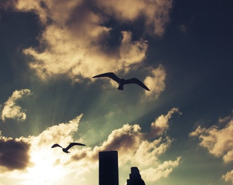 Free Shipping, Corpus Christi Tower, Picture of Corpus Christi, Photo of Birds Flying
