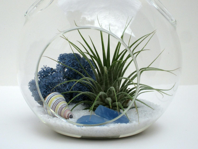 beach terrarium kit white sands hanging terrarium w air. Black Bedroom Furniture Sets. Home Design Ideas