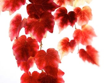 Nature photography, Autumn Leaves, Fall, Red, Orange, Wall Art, Home Decor.