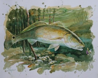 Fine art print of  redfish watercolor painting by Patrick Soper