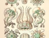 Jellyfish art print Vintage sea art print Nautical art print Sea beach art Ocean art Natural History art sea life art antique wall art beach