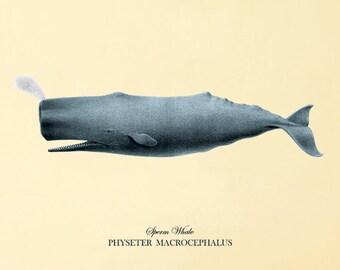Whale art print antique prints Sea art print old prints Nautical art print beach art print Victorian art  print Nature print Ocean art print