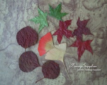 30 Real Mix   Autumn Leaves  Pressed  Maple Leaves -  Perfect for Weddings, Events, Decorations, Art & Craft,  Cards, ScrapBooking
