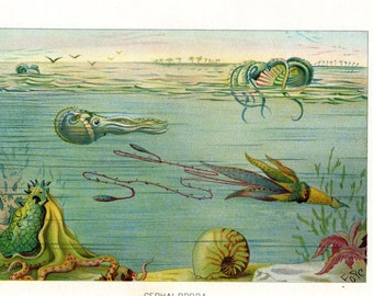 1901 Squid Octopus Cephalopoda Antique Nautical Art Print Marine Life Ocean Lithograph