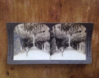 Vintage Stereograph - 1930s Algerian Girl
