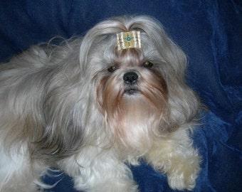 Gold Fancy show dog bow for Shih Tzu