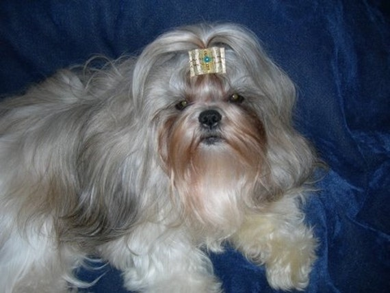 Gold Fancy show dog bow for Shih Tzu