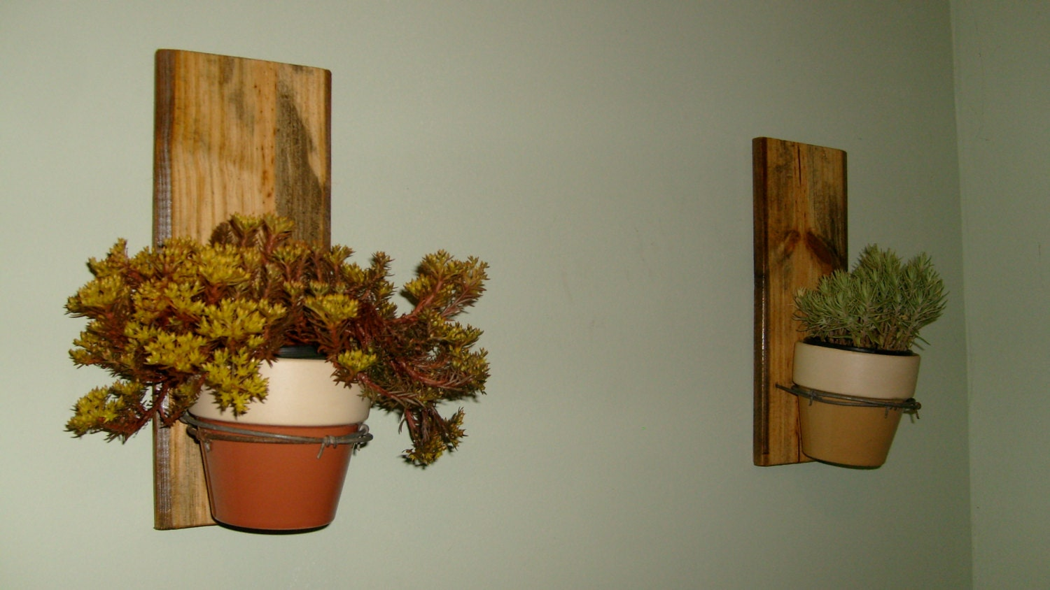 Wall Hanging Plant Holders On Reclaimed Wood