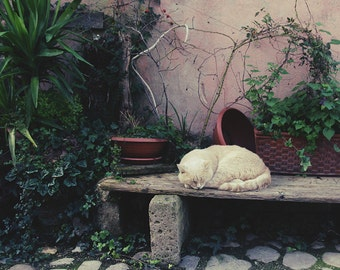 the sleeping cat, photography, Print,