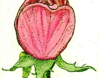 Rosebud - Hand-colored,  - Original Etching & Engraving, Hand-printed, Limited Edition
