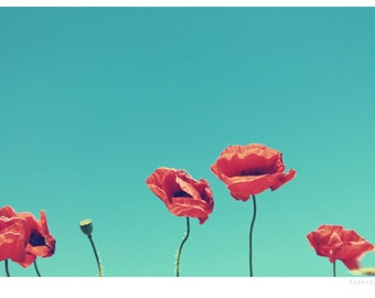 Poppies wildflower photograph, fine art photo print, landscape, nature, flowers, poppy, England, UK