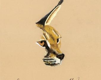 Print of an original pastel drawing of a bobcat