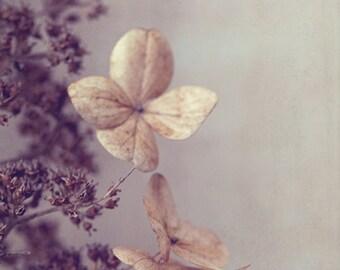 Fine Art Photograph, Dried Hydrangea Flowers, Winter, Flower Photo, Beige, Eggplant, Botanical Print, Woodland Art, Home Decor, 8x12 Print