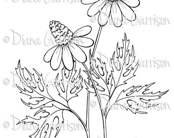 Coneflowers Digi Digital Stamp