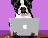Boston Terrier loves his macbook